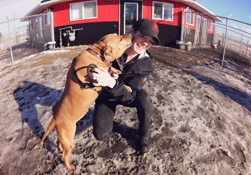 Pit Bull kissing Kennel staff during the winter.
