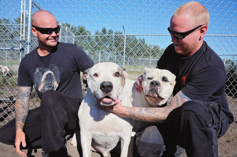 Dog trainers petting American Bulldogs.