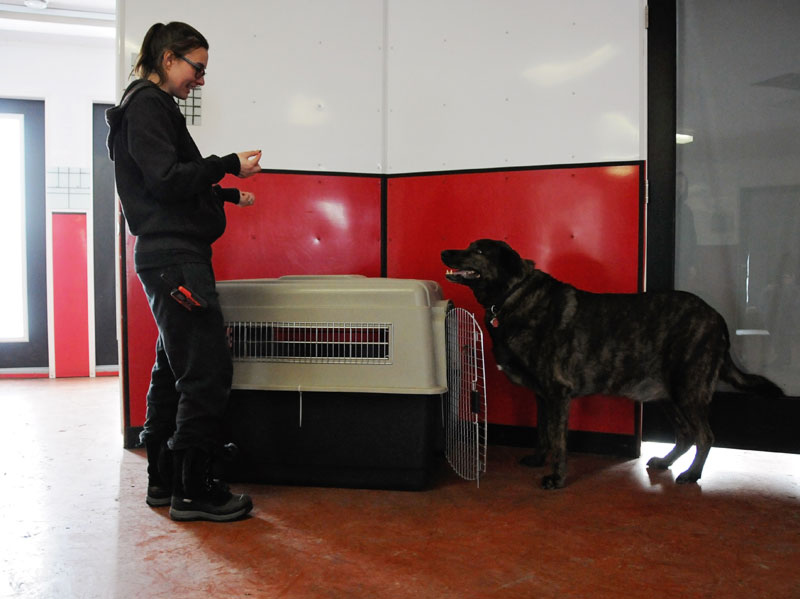Large breed mix crating training lessons.