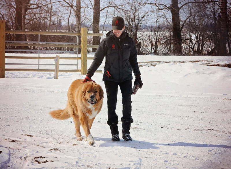 Loose leash walking manners with a Moscow Watch Dog.