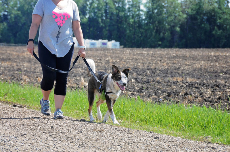 Reactive dog training for loose leash walking with owner leading.