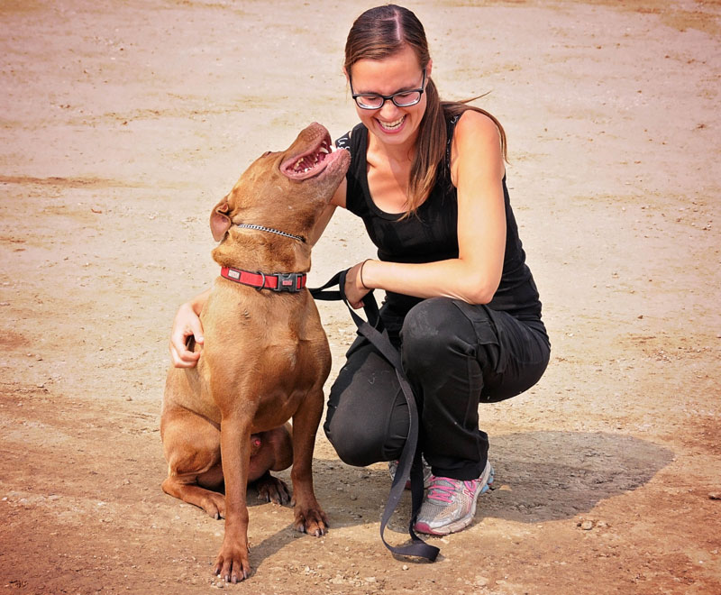 Rescue dog rehabilitation with trainer.