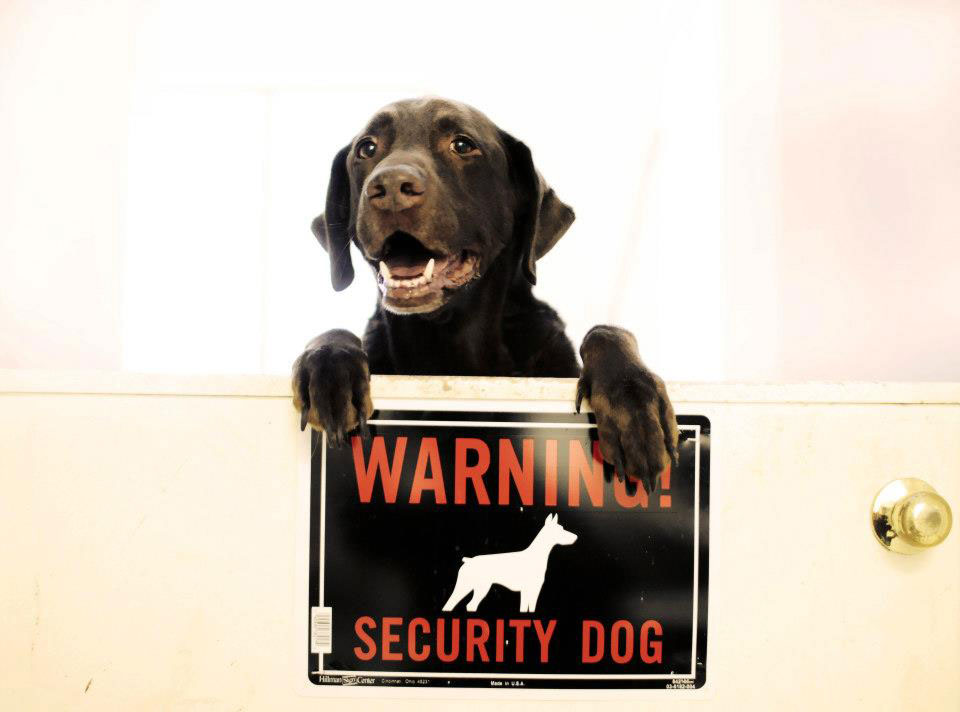 Personal protection k9 guard, Kelso, policing his security dog sign.