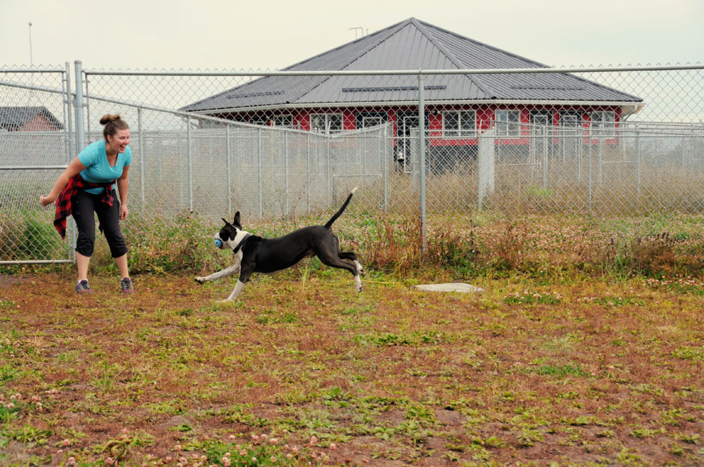 Teaching fetch skills with rescue Pit Bull Dexter in our fenced dog park.