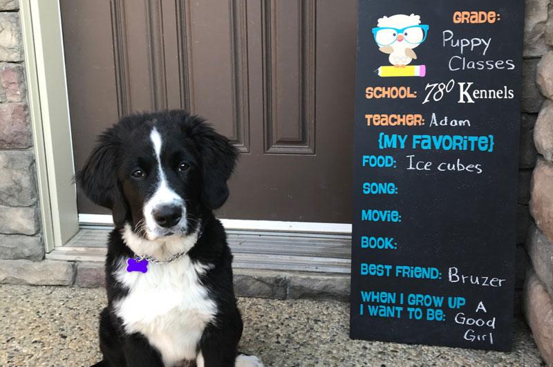 Edmonton Puppy Training Classes | Get Schooled | 780 Kennels